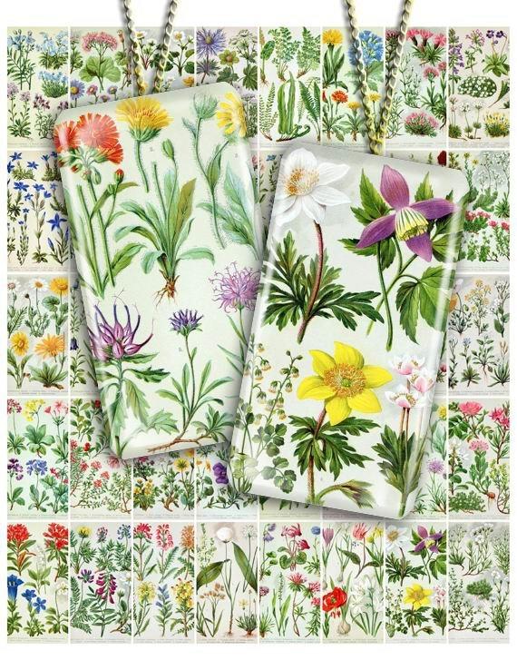 Collage FLOWERS-01 vintage print