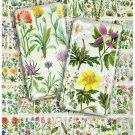 Collage FLOWERS-01 vintage print