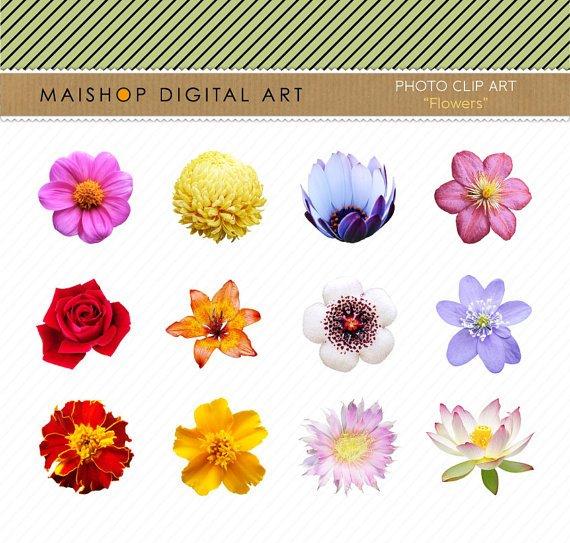 Flowers Clip Art Collage Sheet Flowers Img. for Digital ScrapbookingcardsCollagesCraftsPrints