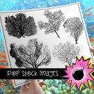 Sea Fan-Coral-Sea Fan Art Silhouettes-Create Sea Fan Art Decor-Set of Large Sea Fan PNG Img.-