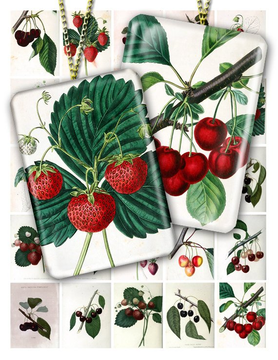 Collage BERRIES-01 vintage print