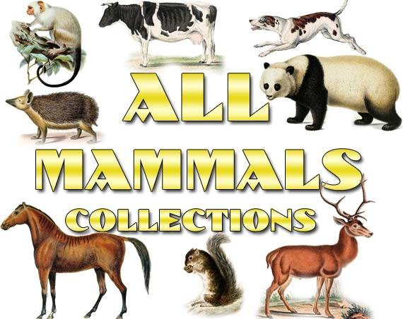 MAMMALS Collections 1-40 with 5900 vintage print