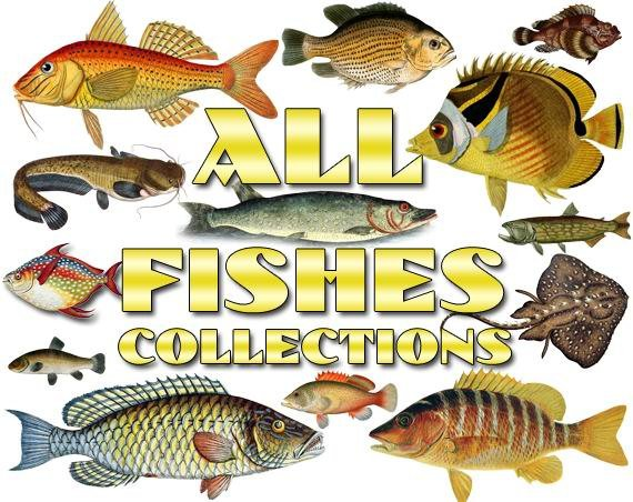 FISHES Collections 1-50 with 7500 vintage print