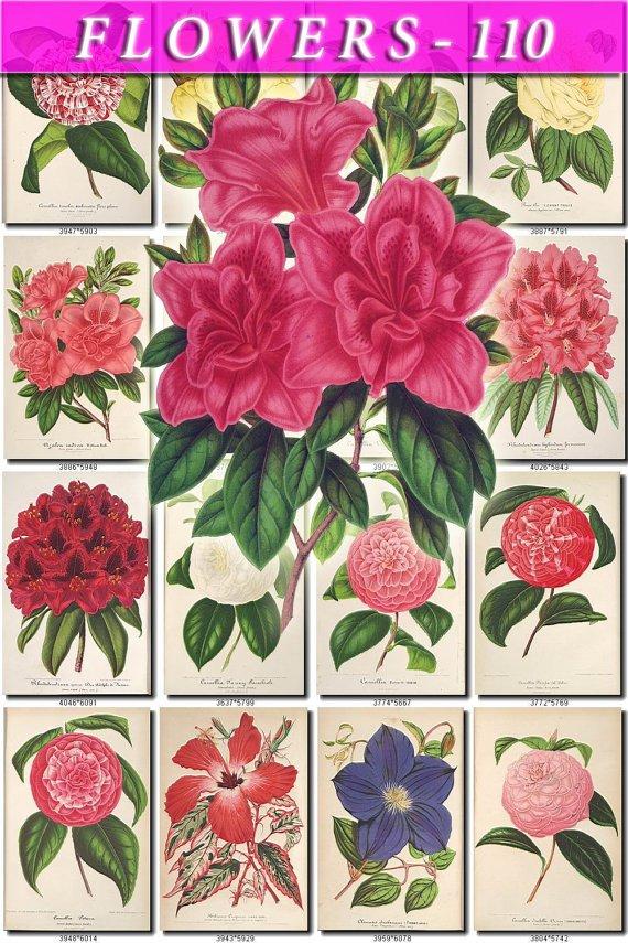 FLOWERS-110 231 vintage print
