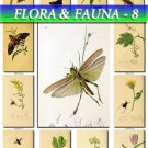 FLORA ,  FAUNA-8 215 vintage print