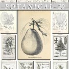 BOTANICAL-20-bw 305 black-, -white vintage print