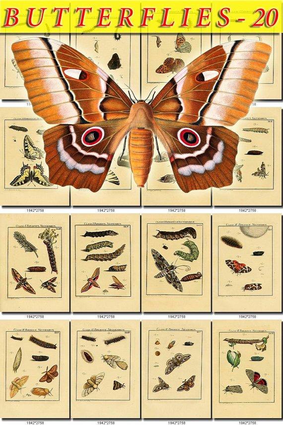 BUTTERFLIES-20 133 vintage print