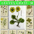 LEAVES GRASS-38 192 vintage print
