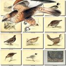 BIRDS-20 229 vintage print