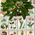 FLOWERS-40 62 vintage print