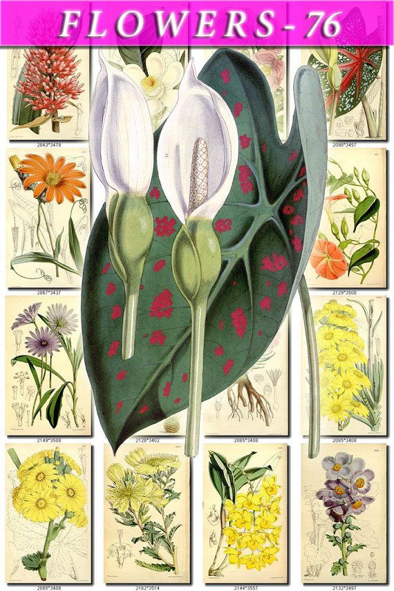 FLOWERS-76 263 vintage print