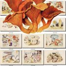 MUSHROOMS-7 183 vintage print