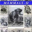 MAMMALS-32-bw 115 black-, -white vintage print