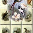 BIRDS-9 157 vintage print