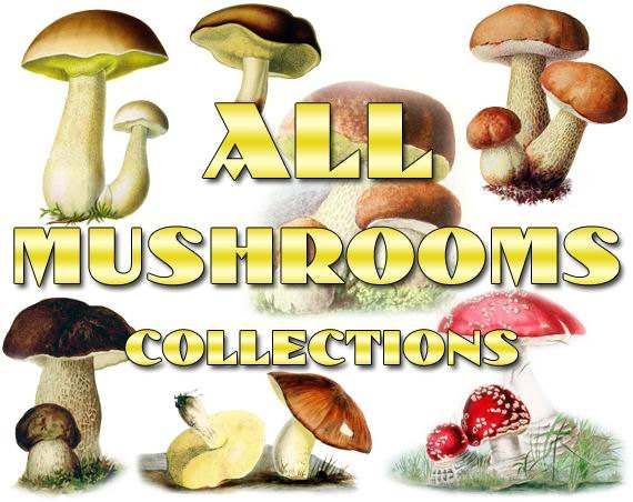 MUSHROOMS Collections 1-19 with 4900 vintage pictures printable illustrations