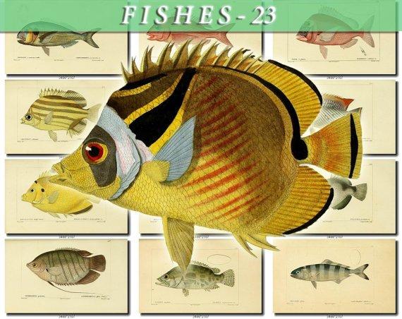 FISHES-23-b13 104 vintage print