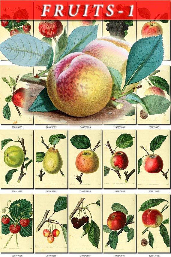 FRUITS VEGETABLES-1 143 vintage print