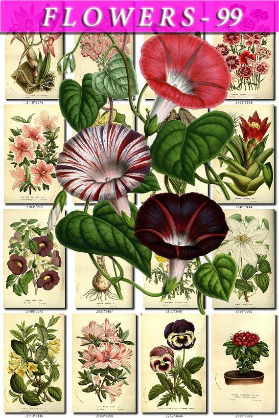 FLOWERS-99 263 vintage print