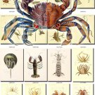 INSECTS-24 120 vintage print