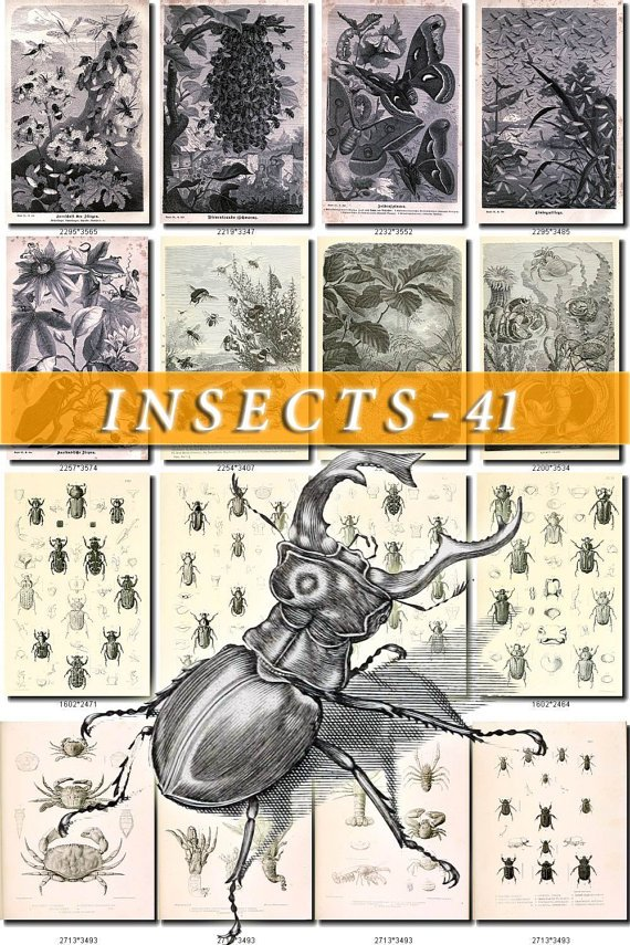 INSECTS-41-bw 177 vintage print