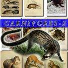 CARNIVORES-2 67 vintage print