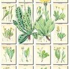LEAVES GRASS-61 259 vintage print
