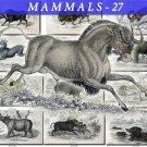 MAMMALS-27 62 vintage print