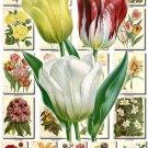 FLOWERS-102 284 vintage print