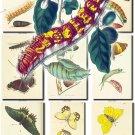 BUTTERFLIES-26 74 vintage print