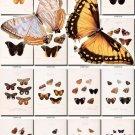 BUTTERFLIES-38 80 vintage print