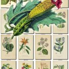 LEAVES GRASS-11 294 vintage print