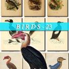 BIRDS-23 218 vintage print