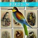 BIRDS-50 53 vintage print