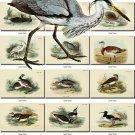 BIRDS-90 217 vintage print