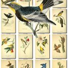 BIRDS-116 140 vintage print