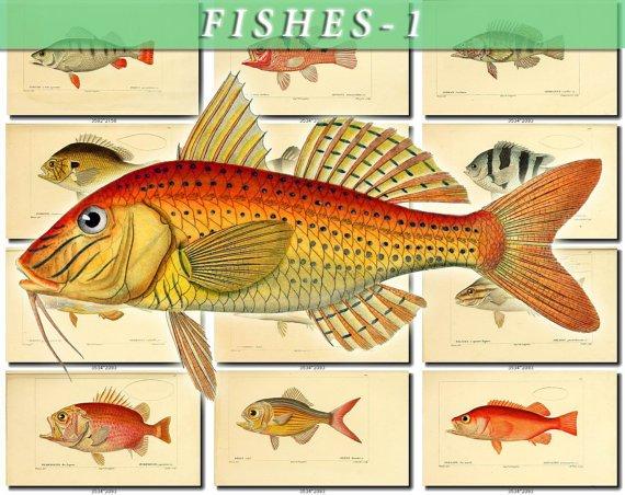 FISHES-1 124 vintage print