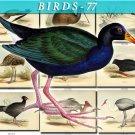 BIRDS-77 64 vintage print