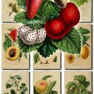 FRUITS VEGETABLES-8 52 vintage print