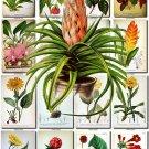 FLOWERS-39 74 vintage print