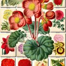 FLOWERS-43 65 vintage print