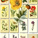 FLOWERS-48 65 vintage print