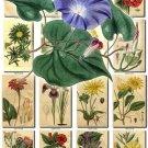 FLOWERS-67 252 vintage print