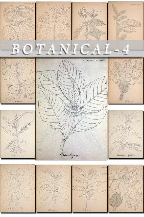 BOTANICAL-4-bw 309 black-, -white vintage print