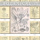 BOTANICAL-15-bw 243 black-, -white vintage print