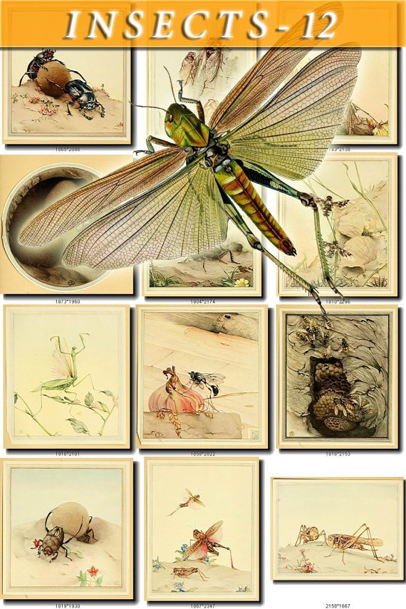 INSECTS-12-b1 289 vintage print