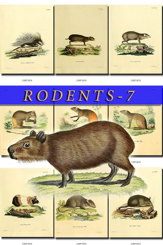 RODENTS-7 50 vintage print