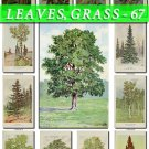 LEAVES GRASS-67 233 vintage print