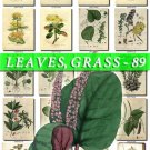 LEAVES GRASS-89 322 vintage print