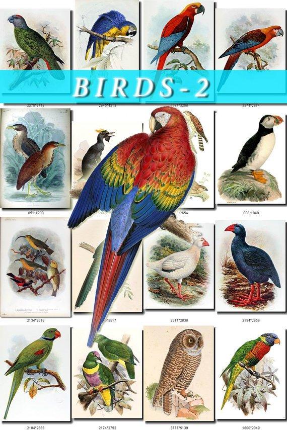 BIRDS-2 1020 vintage print