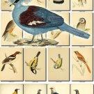 BIRDS-88 199 vintage print